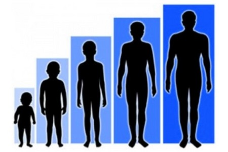 Рост человека