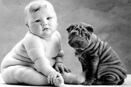 полный малыш и щенок шарпея